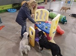 Fur-ever Fun at Steel House Doggy Daycare